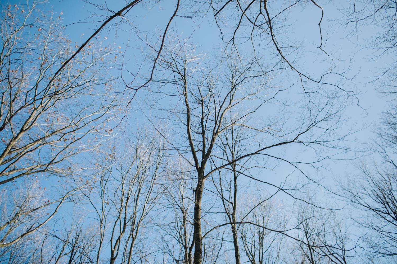tress & blue sky
